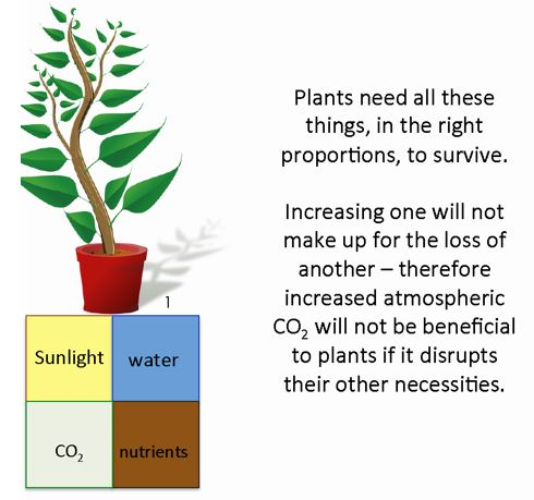 Picture of 4 items essential to plant growth