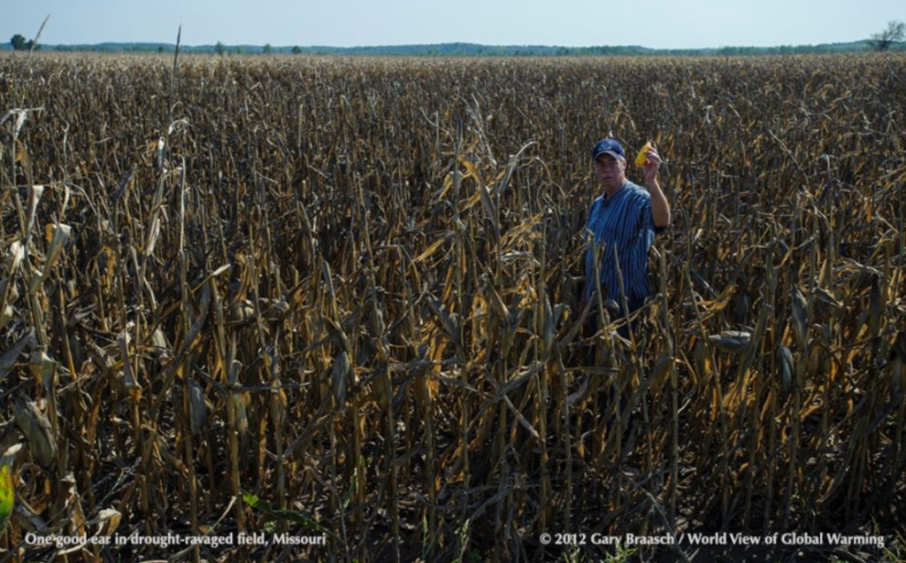 Drought Ravages Missouri Cornfield. Used by permission of Gary Braasch